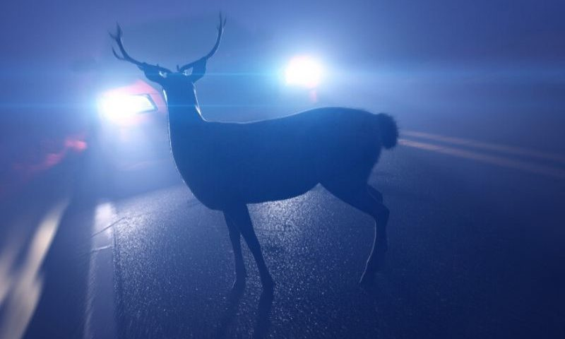 deer in front of a car Jeremy Rosenthal Law Firm